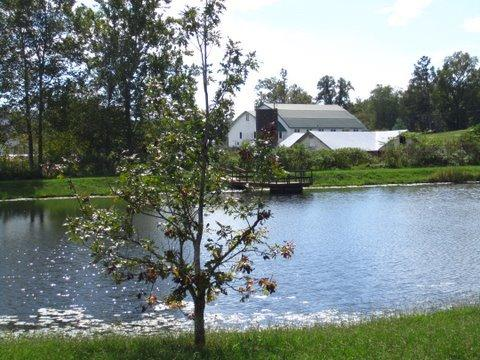 Pond looking out towards the barns